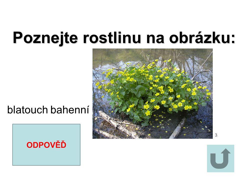 Poznejte rostlinu na obrázku: Poznejte rostlinu na obrázku: mrkev obecná 2.