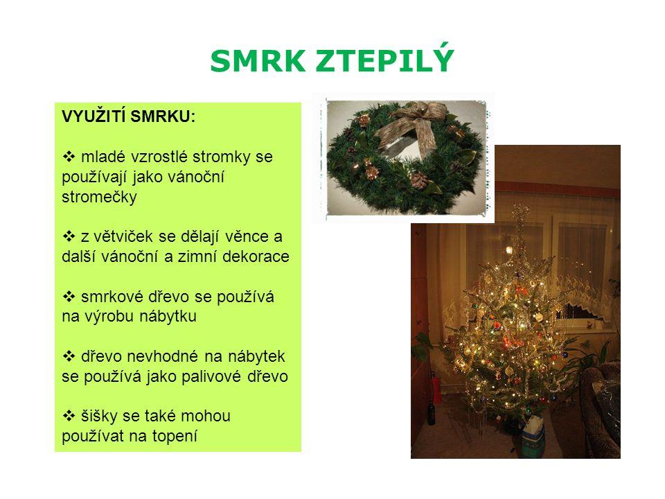 SMRK ZTEPILÝ VYUŽITÍ SMRKU:  mladé vzrostlé stromky se používají jako vánoční stromečky  z větviček se dělají věnce a další vánoční a zimní dekorace