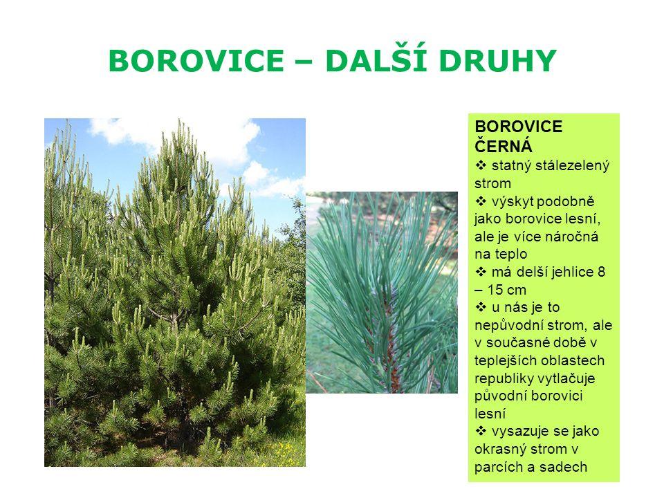 BOROVICE – DALŠÍ DRUHY BOROVICE ČERNÁ  statný stálezelený strom  výskyt podobně jako borovice lesní, ale je více náročná na teplo  má delší jehlice