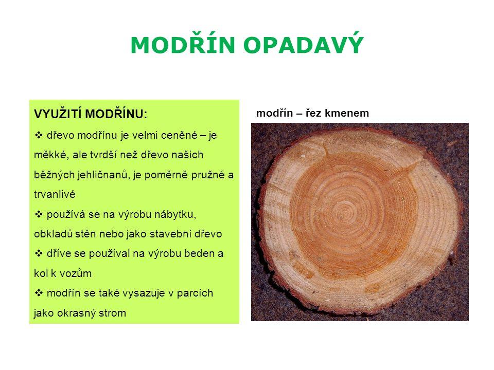 MODŘÍN OPADAVÝ VYUŽITÍ MODŘÍNU:  dřevo modřínu je velmi ceněné – je měkké, ale tvrdší než dřevo našich běžných jehličnanů, je poměrně pružné a trvanl