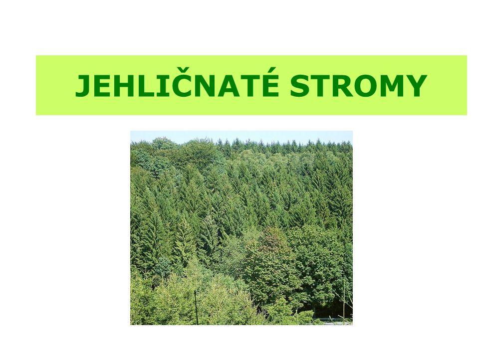  jehličnaté stromy mají listy přeměněná na jehlice  jsou většinou stálezelené, jehličí na zimu neopadává  jehličí se však v průběhu života stromu obměňuje, ale ne naráz, jako je tomu u listů u stromů listnatých  nemají květy, jejich květenstvím je šištice; opylují se větrem  plodem běžných jehličnanů je šiška  nejstarší jehličnany rostly už v období pravěku