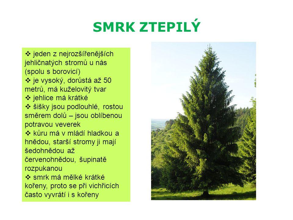 SMRK ZTEPILÝ  jeden z nejrozšířenějších jehličnatých stromů u nás (spolu s borovicí)  je vysoký, dorůstá až 50 metrů, má kuželovitý tvar  jehlice m