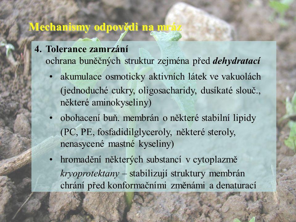 Mechanismy odpovědi na mráz 4.Tolerance zamrzání ochrana buněčných struktur zejména před dehydratací akumulace osmoticky aktivních látek ve vakuolách (jednoduché cukry, oligosacharidy, dusíkaté slouč., některé aminokyseliny) obohacení buň.