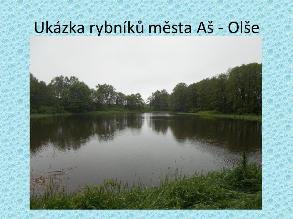 Ukázka rybníků města Aš - Olše