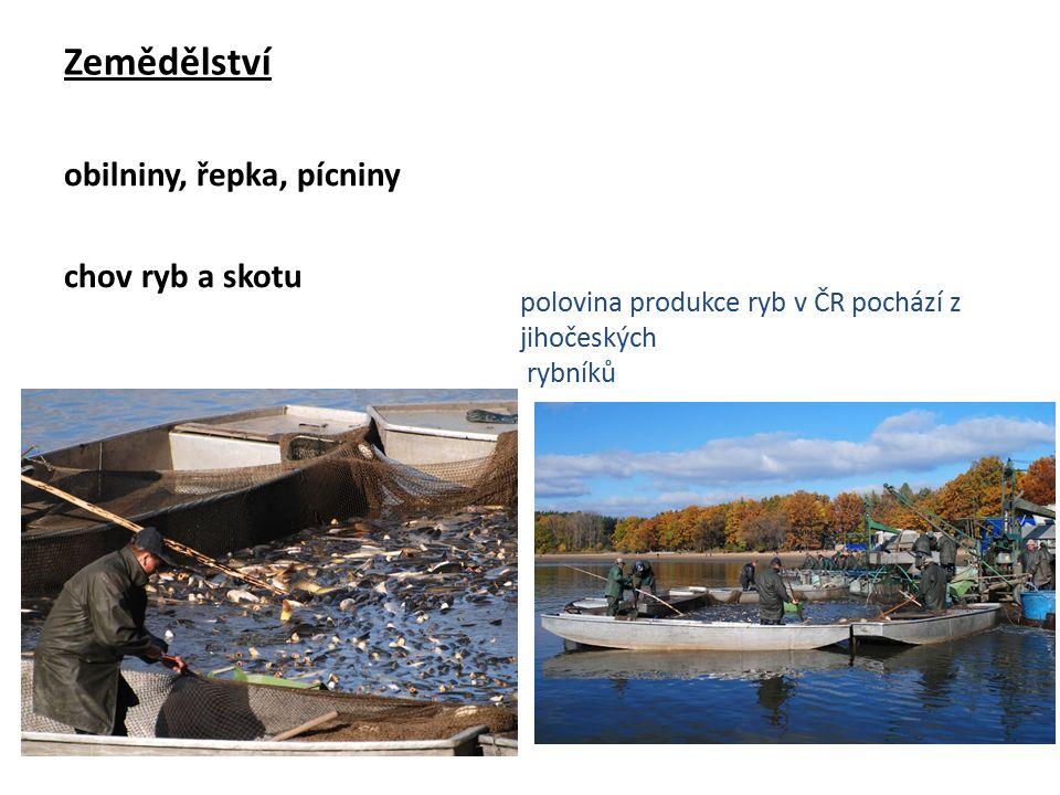 Zemědělství obilniny, řepka, pícniny chov ryb a skotu polovina produkce ryb v ČR pochází z jihočeských rybníků