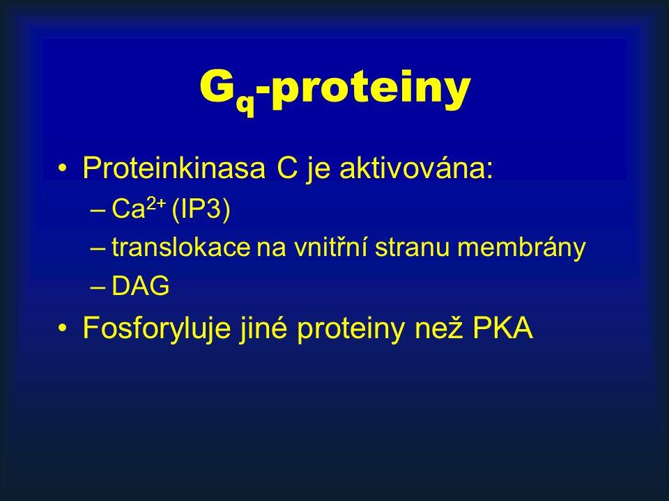 G q -proteiny Proteinkinasa C je aktivována: –Ca 2+ (IP3) –translokace na vnitřní stranu membrány –DAG Fosforyluje jiné proteiny než PKA