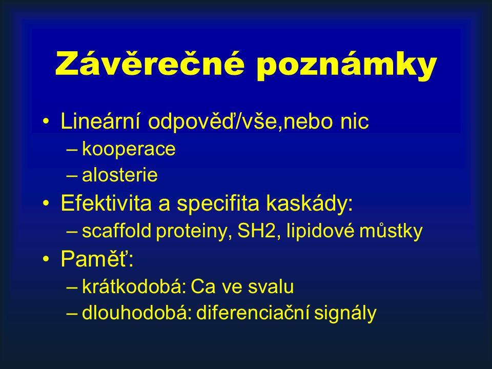 Závěrečné poznámky Lineární odpověď/vše,nebo nic –kooperace –alosterie Efektivita a specifita kaskády: –scaffold proteiny, SH2, lipidové můstky Paměť: –krátkodobá: Ca ve svalu –dlouhodobá: diferenciační signály