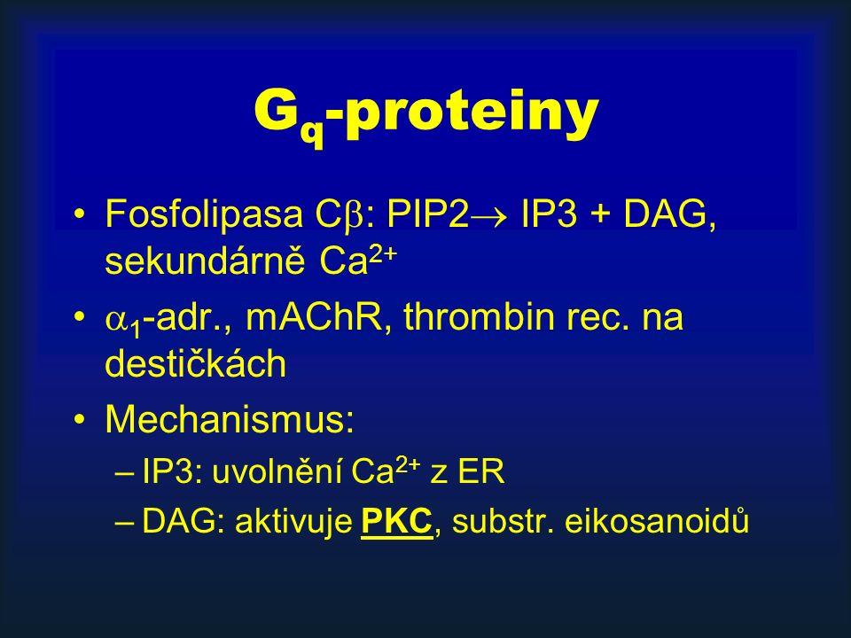 G q -proteiny Fosfolipasa C  : PIP2  IP3 + DAG, sekundárně Ca 2+  1 -adr., mAChR, thrombin rec.