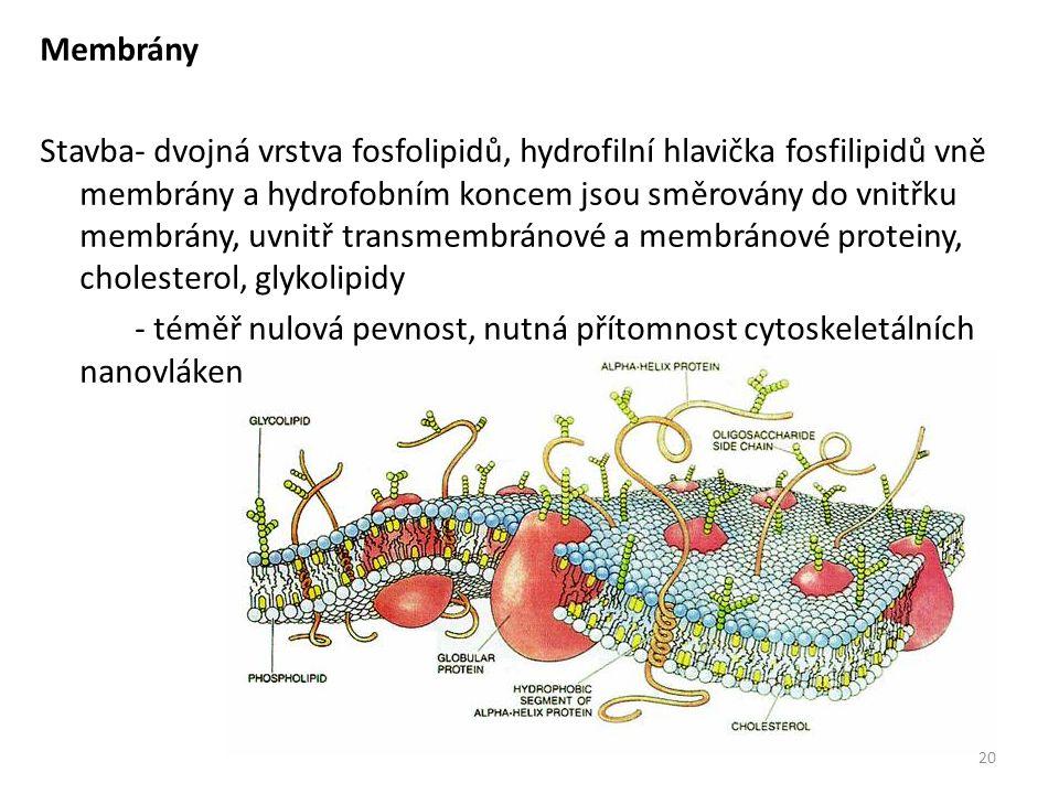 Membrány Stavba- dvojná vrstva fosfolipidů, hydrofilní hlavička fosfilipidů vně membrány a hydrofobním koncem jsou směrovány do vnitřku membrány, uvnitř transmembránové a membránové proteiny, cholesterol, glykolipidy - téměř nulová pevnost, nutná přítomnost cytoskeletálních nanovláken 20
