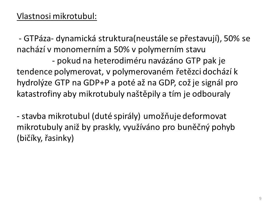 Vlastnosi mikrotubul: - GTPáza- dynamická struktura(neustále se přestavují), 50% se nachází v monomerním a 50% v polymerním stavu - pokud na heterodiméru navázáno GTP pak je tendence polymerovat, v polymerovaném řetězci dochází k hydrolýze GTP na GDP+P a poté až na GDP, což je signál pro katastrofiny aby mikrotubuly naštěpily a tím je odbouraly - stavba mikrotubul (duté spirály) umožňuje deformovat mikrotubuly aniž by praskly, využíváno pro buněčný pohyb (bičíky, řasinky) 9