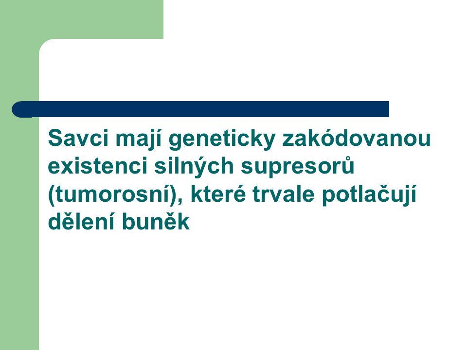 Savci mají geneticky zakódovanou existenci silných supresorů (tumorosní), které trvale potlačují dělení buněk