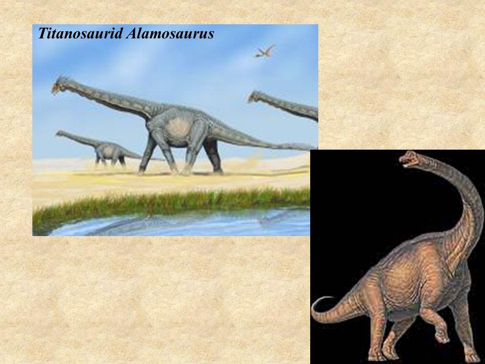 Titanosaurid Alamosaurus