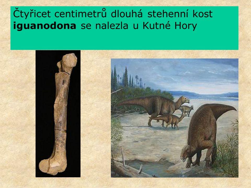 Čtyřicet centimetrů dlouhá stehenní kost iguanodona se nalezla u Kutné Hory