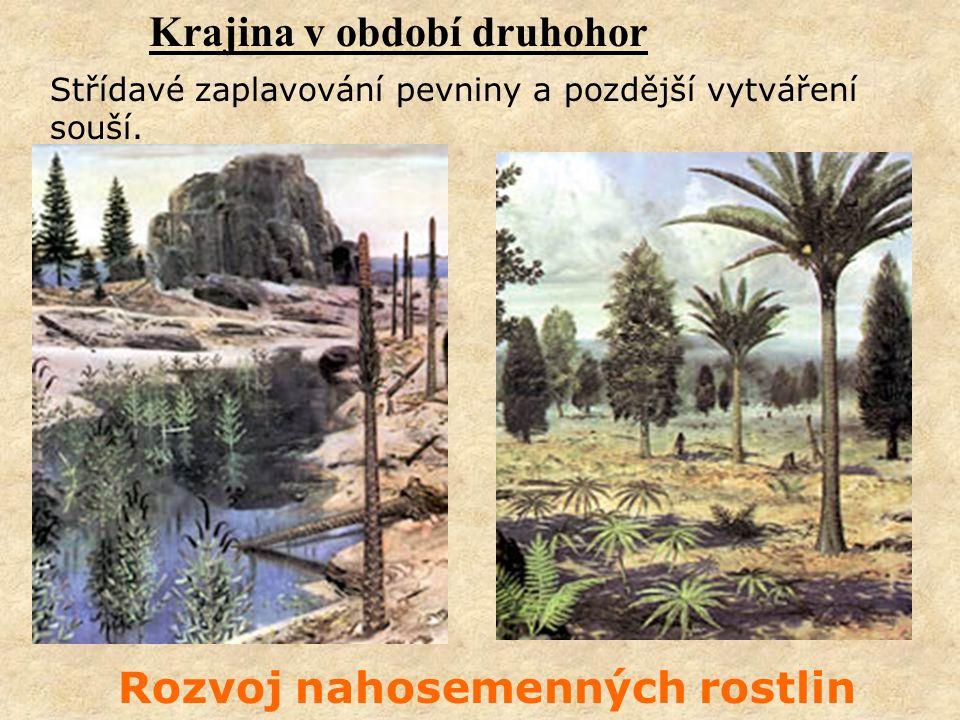 Krajina v období druhohor Rozvoj nahosemenných rostlin Střídavé zaplavování pevniny a pozdější vytváření souší.
