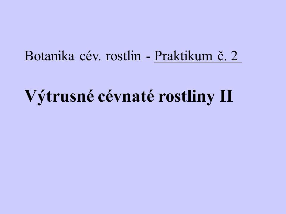 Cévnaté výtrusné rostliny – kapraďorosty (převládá sporofyt): stejnovýtrusé kapradiny: haploidní výtrus – prothalium (charakter stélky, gametofyt s archegonii a antheridii) - syngamie – - diploidní zygota - sporofyt - sporangia - R - spory plavuně: gametofyt oboupohlavný přesličky: gametofyt jednopohlavný (homoiosporie)