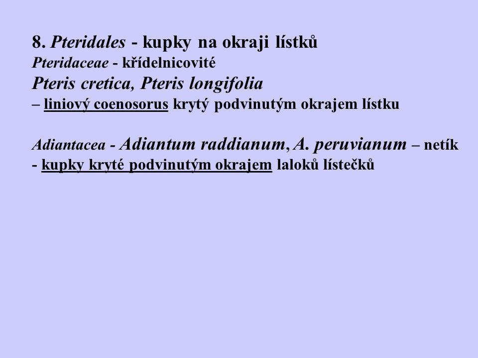 8. Pteridales - kupky na okraji lístků Pteridaceae - křídelnicovité Pteris cretica, Pteris longifolia – liniový coenosorus krytý podvinutým okrajem lí