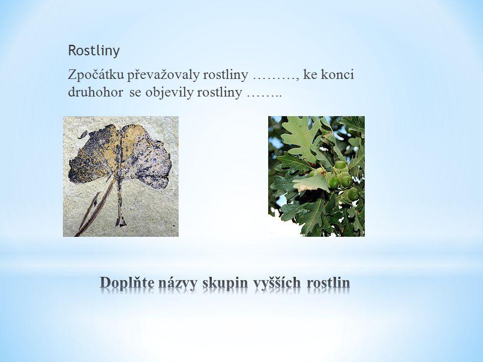 Rostliny Zpočátku převažovaly rostliny ………, ke konci druhohor se objevily rostliny ……..