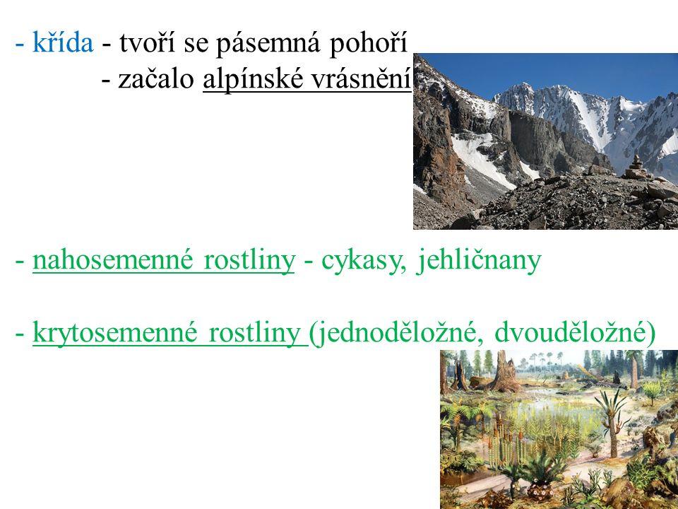 - křída - tvoří se pásemná pohoří - začalo alpínské vrásnění - nahosemenné rostliny - cykasy, jehličnany - krytosemenné rostliny (jednoděložné, dvouděložné)