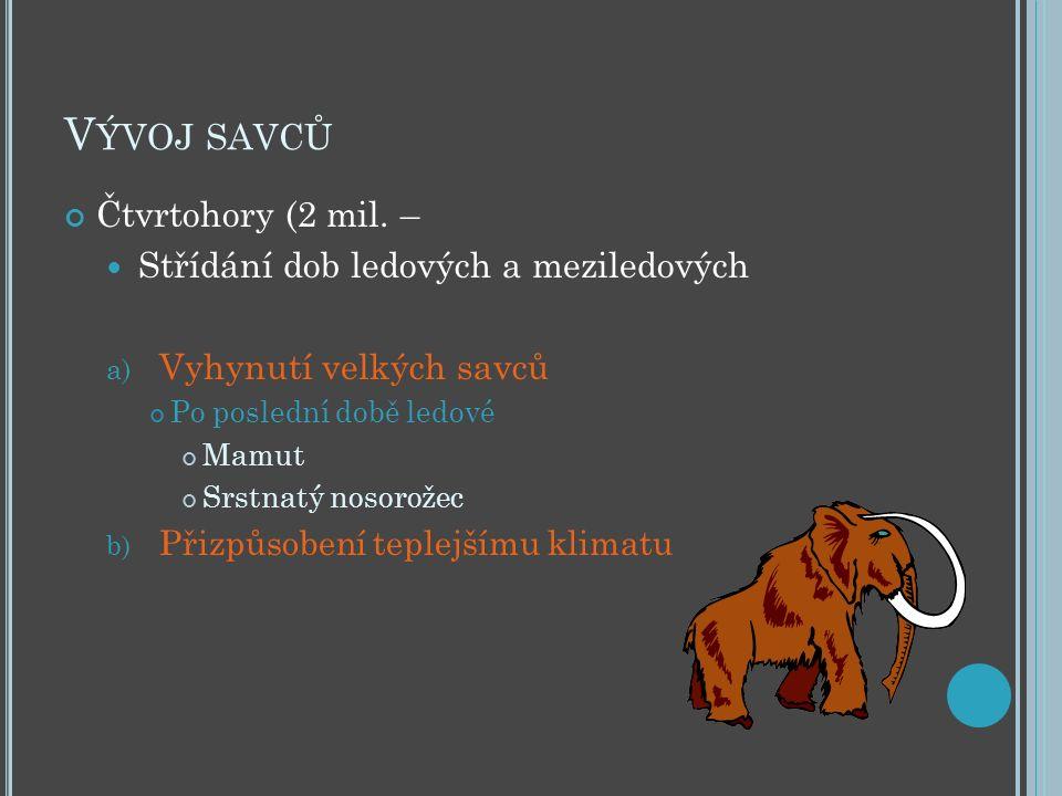 V ÝVOJ SAVCŮ Čtvrtohory (2 mil. – Střídání dob ledových a meziledových a) Vyhynutí velkých savců Po poslední době ledové Mamut Srstnatý nosorožec b) P
