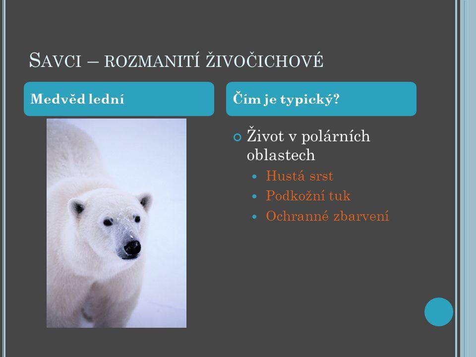 S AVCI – ROZMANITÍ ŽIVOČICHOVÉ Život v polárních oblastech Hustá srst Podkožní tuk Ochranné zbarvení Medvěd ledníČím je typický?