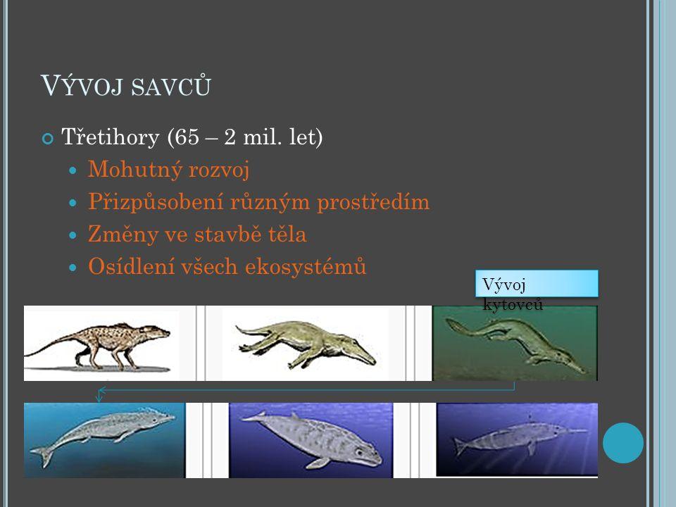 V ÝVOJ SAVCŮ Třetihory (65 – 2 mil. let) Mohutný rozvoj Přizpůsobení různým prostředím Změny ve stavbě těla Osídlení všech ekosystémů Vývoj kytovců