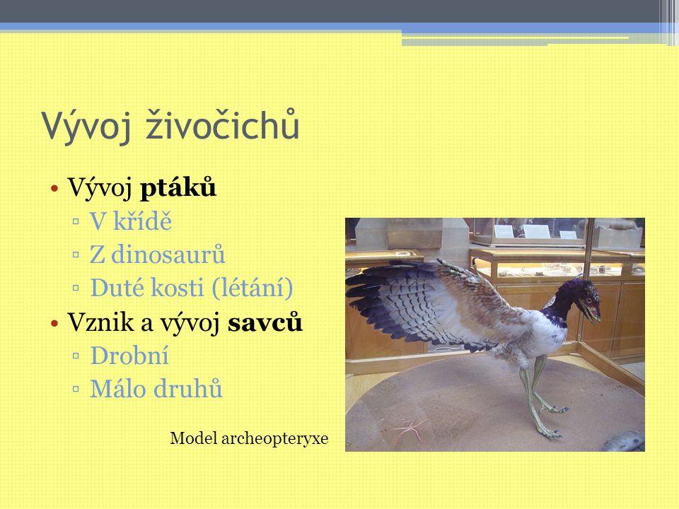 Vývoj živočichů Vývoj ptáků ▫V křídě ▫Z dinosaurů ▫Duté kosti (létání) Vznik a vývoj savců ▫Drobní ▫Málo druhů Model archeopteryxe