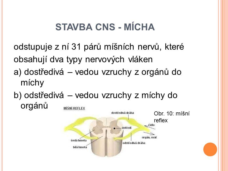 odstupuje z ní 31 párů míšních nervů, které obsahují dva typy nervových vláken a) dostředivá – vedou vzruchy z orgánů do míchy b) odstředivá – vedou v
