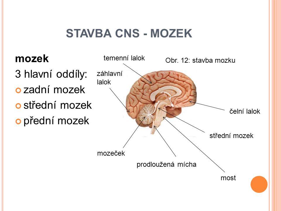 mozek 3 hlavní oddíly: zadní mozek střední mozek přední mozek STAVBA CNS - MOZEK mozeček prodloužená mícha most střední mozek čelní lalok temenní lalo