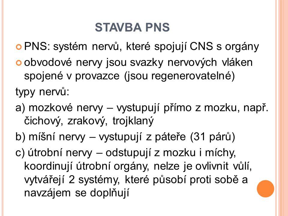 STAVBA PNS PNS: systém nervů, které spojují CNS s orgány obvodové nervy jsou svazky nervových vláken spojené v provazce (jsou regenerovatelné) typy ne