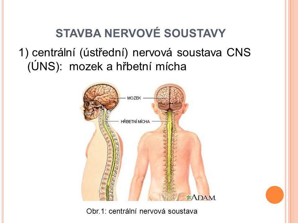 STAVBA NERVOVÉ SOUSTAVY 1) centrální (ústřední) nervová soustava CNS (ÚNS): mozek a hřbetní mícha Obr.1: centrální nervová soustava
