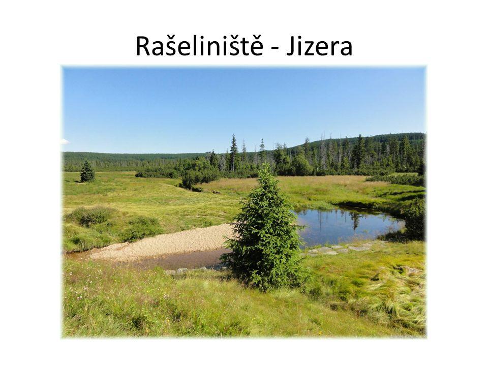 Rašeliniště - Jizera