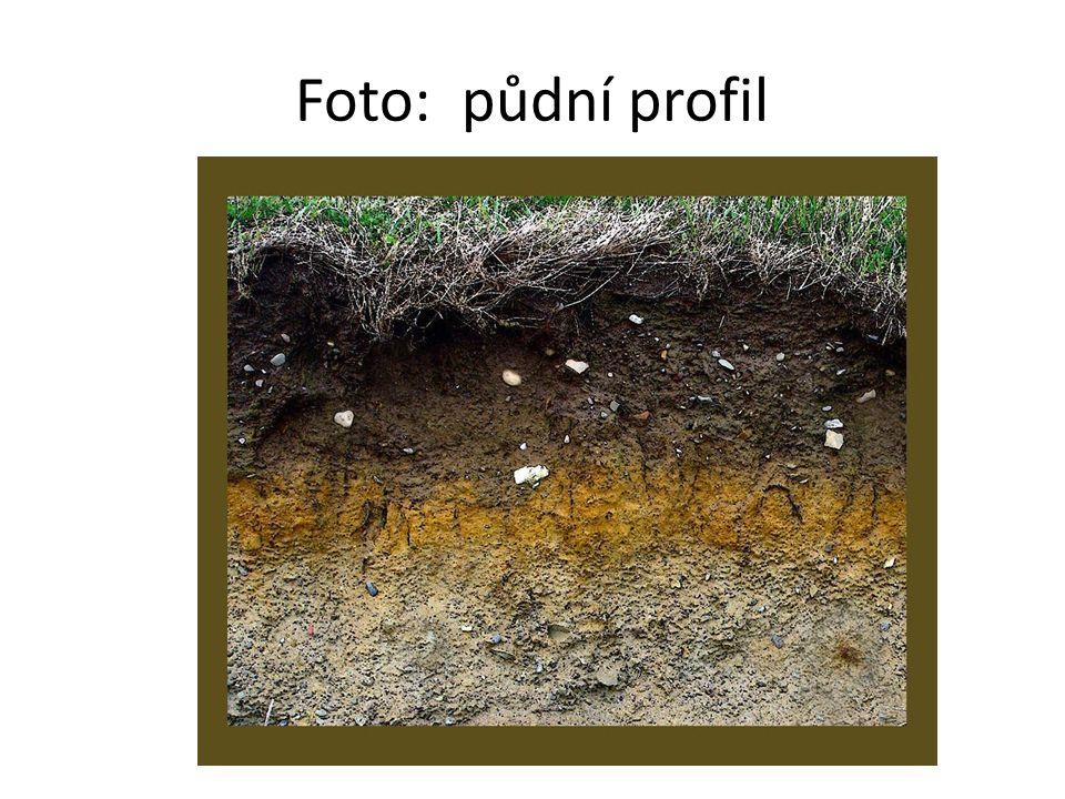 Foto: půdní profil