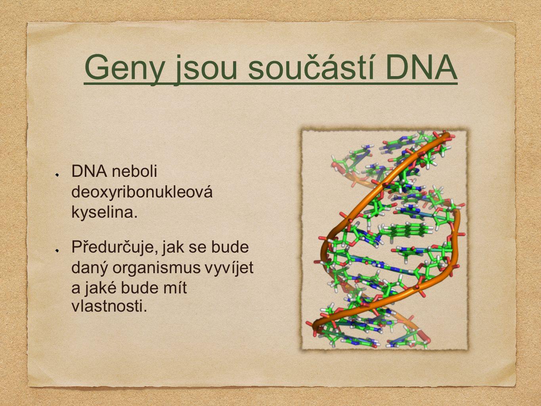 Geny jsou součástí DNA DNA neboli deoxyribonukleová kyselina.
