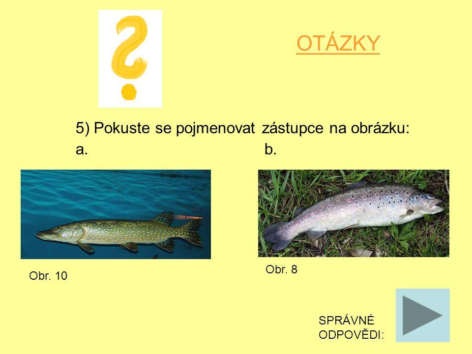 OTÁZKY 5) Pokuste se pojmenovat zástupce na obrázku: a. b. SPRÁVNÉ ODPOVĚDI: Obr. 10 Obr. 8
