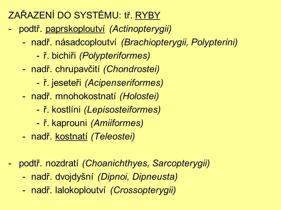 ZAŘAZENÍ DO SYSTÉMU: tř. RYBY -podtř. paprskoploutví (Actinopterygii) -nadř.