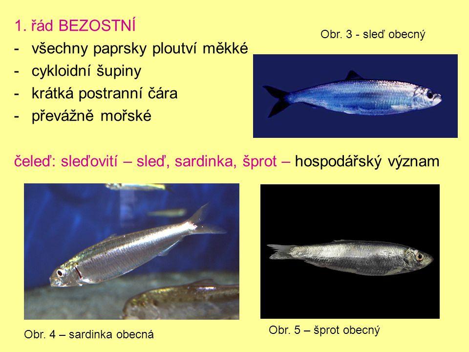 1. řád BEZOSTNÍ -všechny paprsky ploutví měkké -cykloidní šupiny -krátká postranní čára -převážně mořské čeleď: sleďovití – sleď, sardinka, šprot – ho