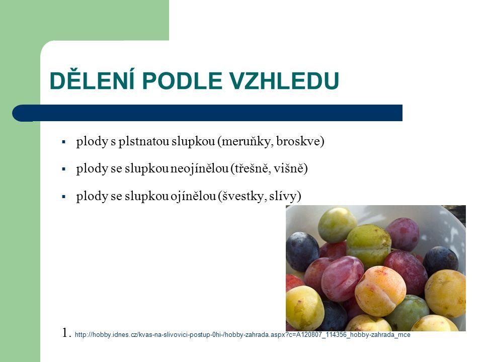 DĚLENÍ PODLE VZHLEDU  plody s plstnatou slupkou (meruňky, broskve)  plody se slupkou neojínělou (třešně, višně)  plody se slupkou ojínělou (švestky, slívy) 1.