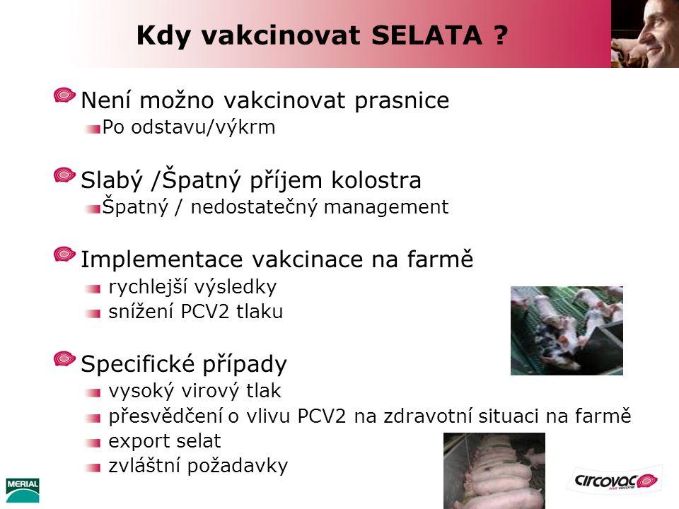 Kdy vakcinovat SELATA ? Není možno vakcinovat prasnice Po odstavu/výkrm Slabý /Špatný příjem kolostra Špatný / nedostatečný management Implementace va