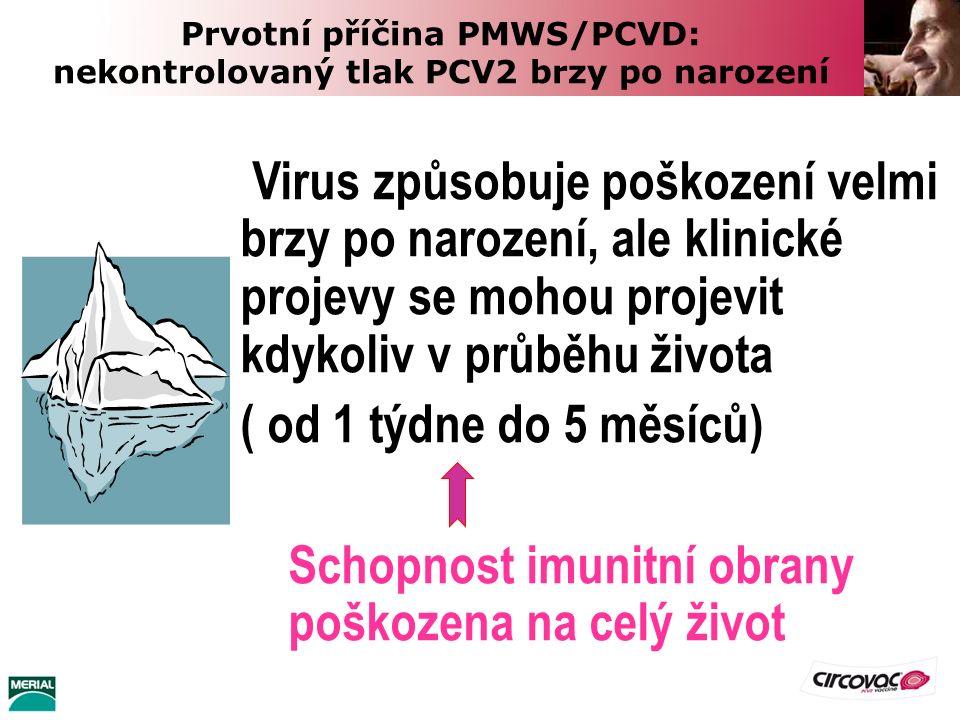 Prvotní příčina PMWS/PCVD: nekontrolovaný tlak PCV2 brzy po narození Virus způsobuje poškození velmi brzy po narození, ale klinické projevy se mohou p