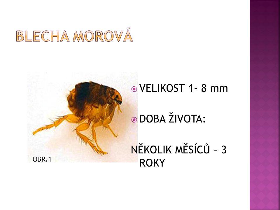  VELIKOST 1- 8 mm  DOBA ŽIVOTA: NĚKOLIK MĚSÍCŮ – 3 ROKY OBR.1