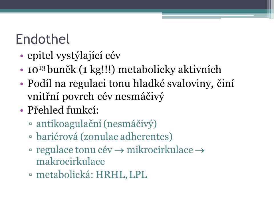 Endothel epitel vystýlající cév 10 13 buněk (1 kg!!!) metabolicky aktivních Podíl na regulaci tonu hladké svaloviny, činí vnitřní povrch cév nesmáčivý Přehled funkcí: ▫antikoagulační (nesmáčivý) ▫bariérová (zonulae adherentes) ▫regulace tonu cév  mikrocirkulace  makrocirkulace ▫metabolická: HRHL, LPL