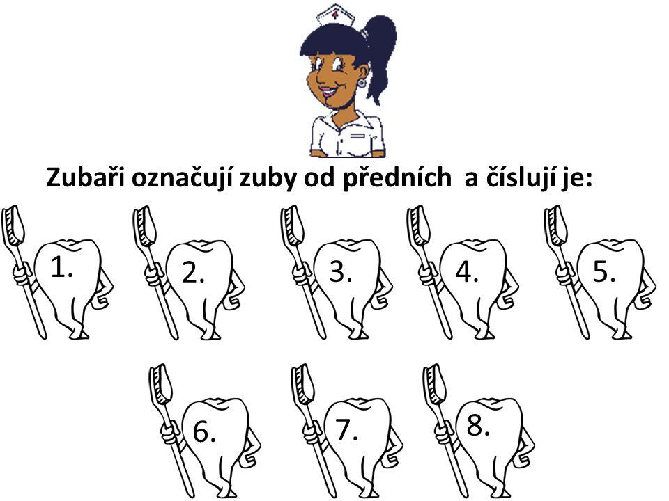 Zubaři označují zuby od předních a číslují je: 8. 4. 6. 5.7.3.2. 1.