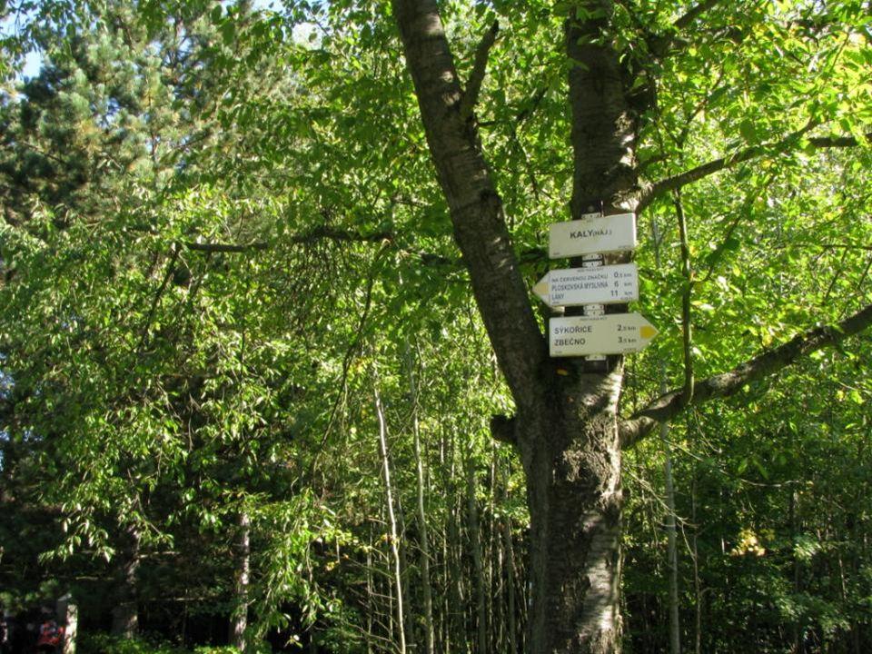 Křivoklátsko je jedinečným územím kde se na většině území zachovaly původní listnaté lesy s převahou dubů, javorů, buků a již vzácných jedlí.