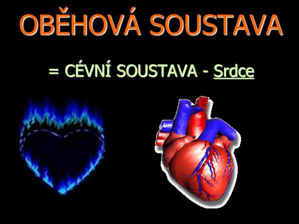 OBĚHOVÁ SOUSTAVA = CÉVNÍ SOUSTAVA - Srdce