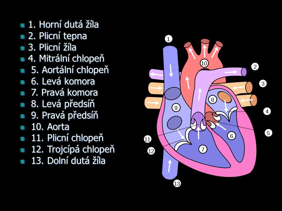 1. Horní dutá žíla 1. Horní dutá žíla 2. Plicní tepna 2.