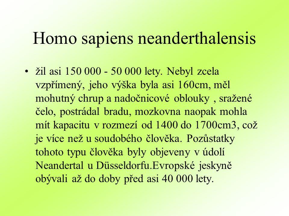 Homo sapiens neanderthalensis žil asi 150 000 - 50 000 lety. Nebyl zcela vzpřímený, jeho výška byla asi 160cm, měl mohutný chrup a nadočnicové oblouky