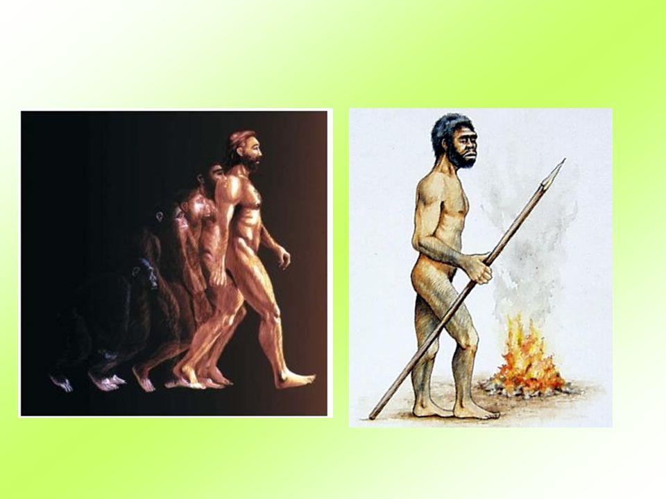 Homo sapiens sapiens současný člověk, který se fyzicky již téměř neliší od nás.