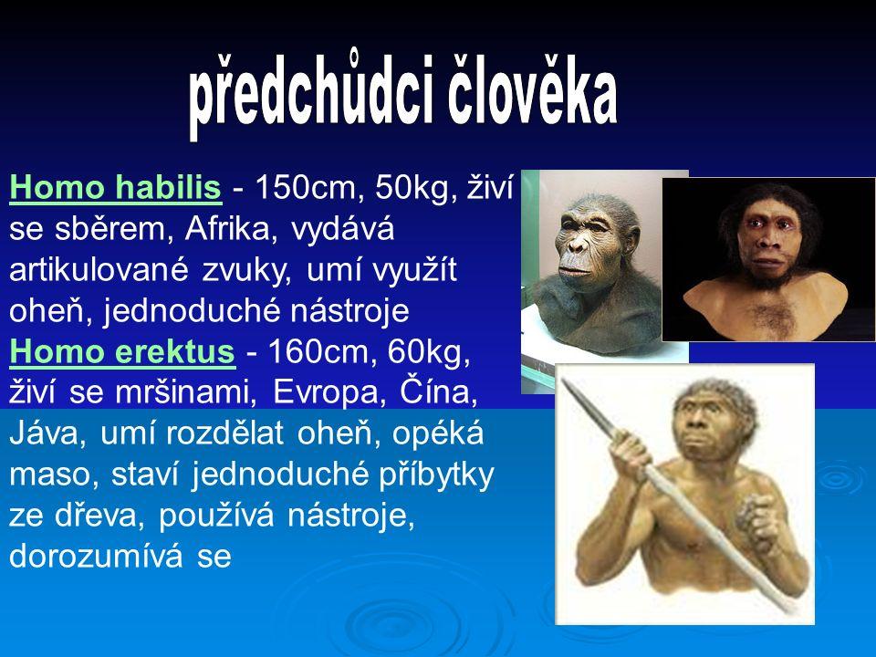 Homo habilis - 150cm, 50kg, živí se sběrem, Afrika, vydává artikulované zvuky, umí využít oheň, jednoduché nástroje Homo erektus - 160cm, 60kg, živí se mršinami, Evropa, Čína, Jáva, umí rozdělat oheň, opéká maso, staví jednoduché příbytky ze dřeva, používá nástroje, dorozumívá se