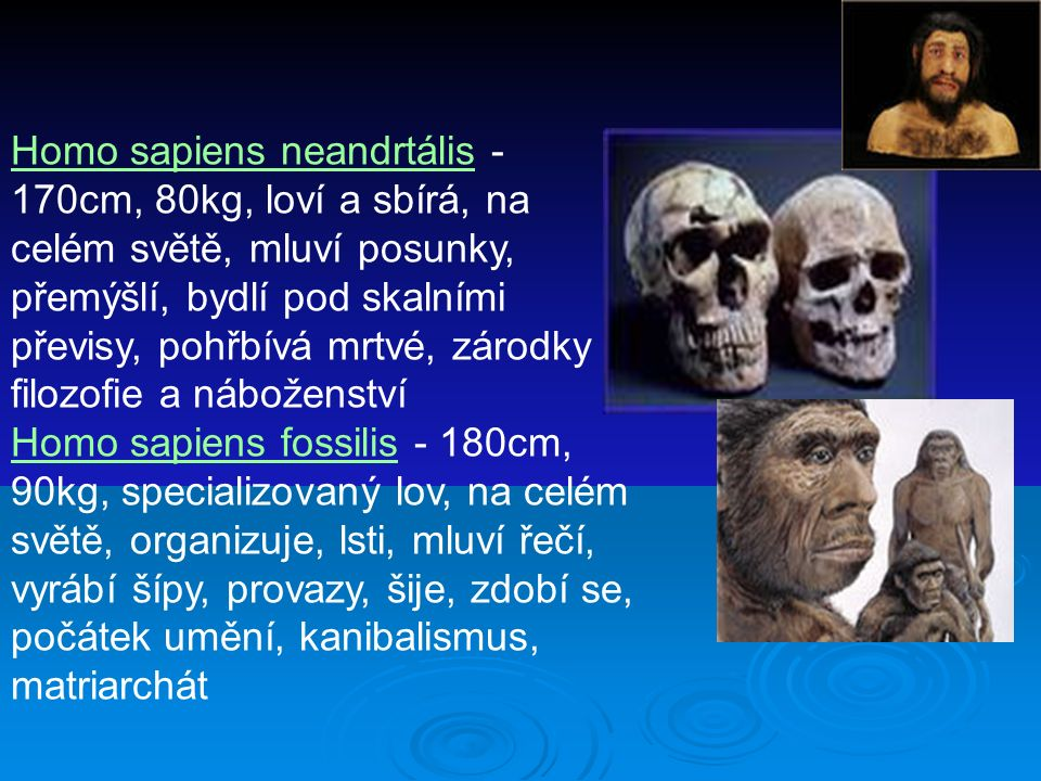Homo sapiens neandrtális - 170cm, 80kg, loví a sbírá, na celém světě, mluví posunky, přemýšlí, bydlí pod skalními převisy, pohřbívá mrtvé, zárodky filozofie a náboženství Homo sapiens fossilis - 180cm, 90kg, specializovaný lov, na celém světě, organizuje, lsti, mluví řečí, vyrábí šípy, provazy, šije, zdobí se, počátek umění, kanibalismus, matriarchát