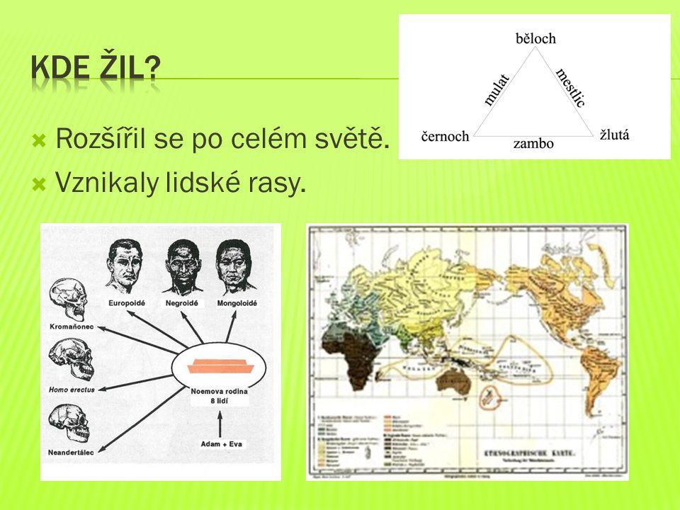  Rozšířil se po celém světě.  Vznikaly lidské rasy.
